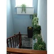 Озеленение интерьеров, фитодизайн фото