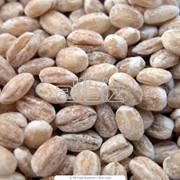 Крупа оптом по Украине Перловая, ячневая, пшеничная крупа фото