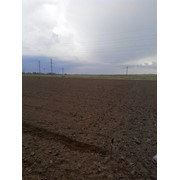Продам землю сельхозназначения фото