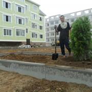 Озеленение жилого комплекса в Казахстане фото