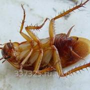 Избавиться от тараканов фото