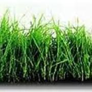 Травы кормовые фото