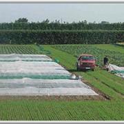 Агроволокно - пленка-защита растений от заморозков фото