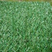 Искусственная трава Образец 5 фото