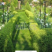 Живая изгородь – произведение искусства фото