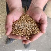 Переработка зерна и круп фото