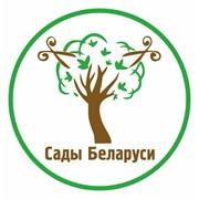 Обрезка деревьев и кустарников в Беларуси (Минск) фото
