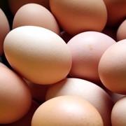 Яйцо С1 фото