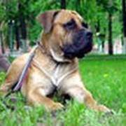 Прогулки с собаками. фото
