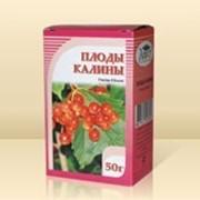 Калина, плоды 50гр. фото