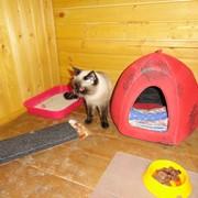Зоогостиница для кошек Среда Обитания фото