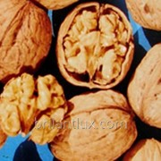 Саженцы грецкого ореха сорт Костюженский фото