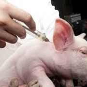Вакцина пр/бол Ауески и рожи свиней, суспенз фото