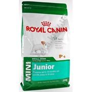 Корм для собак Royal Canin Mini Junior 2 кг фото
