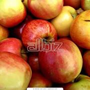 Овощехранилище для фруктов и овощей фото