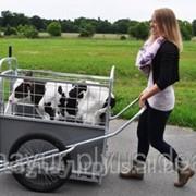 Тележка для транспортировки телят на ферме CALFBUGGY фото