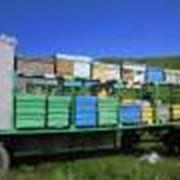Павильон передвижной для пчел фото