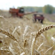 Подготовка специалистов органического агропроизводства фото