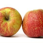 """Яблоки """" Джонаголд"""" фото"""