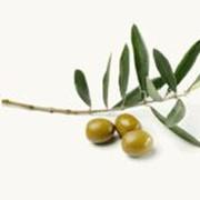 Масло оливковое нерафинированное холодного отжима, Virgin Olive Oil фото