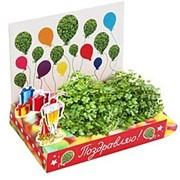 Поздравляю Живая открытка Happy Plant наборы для выращивания фото