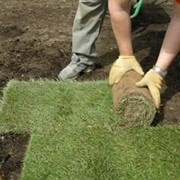 Укладка газона в Молдове, недорого! фото