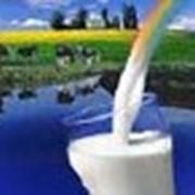Молоко пастеризованное фото