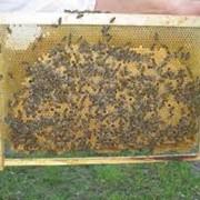 Реализация пчелопакетов фото