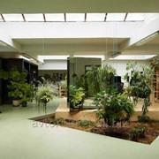 Услуги по Озеленению помещений фото