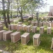 Рамки для ульев,ящики для пчелопакетов фото