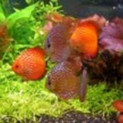 Оформление аквариума фото