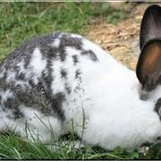 Кролик для дачного сезона фото