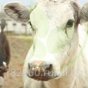 Профессиональные консультации в сфере животноводства фото