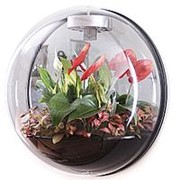 Настенный флорариум Flandriss Miniball Black фото
