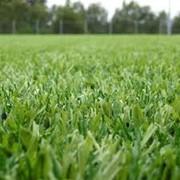 Искусственная трава в Алматы фото