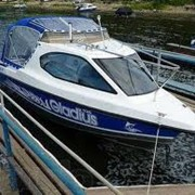 Катер Gladius Sea Wind 520 фото