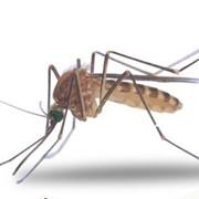 Борьба с комарами. Николаев. фотография