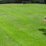 Подкормка газонов фото