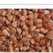 Крупа гречневая, ядрица, пропаренная, быстроразвариваемая.Продукты питания. От производителя. Харьковагроинвест, ООО фото