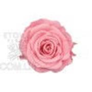 Роза Стандарт 6гол. розовый Код. RST/2420 фото
