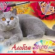 Альбом для рисования 40 л Британский кот, на скрепке, (Profit) фото
