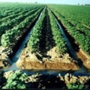 Ресурсосберегающие технологии управления водно-солевым режимом почв фото