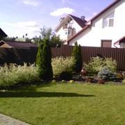Устройство посевного или рулонного газона фото