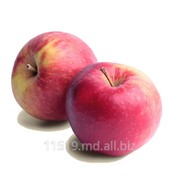 Яблоки сорт Айдаред фото