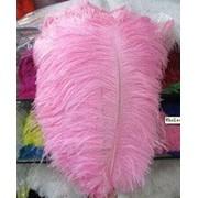 Перо страуса. Цвет Светло-розовый. Размер 45-50cм. (1шт.) ПС50-02 фото