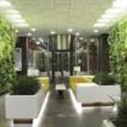 Фитодизайн (оформление зимних садов, офисов) фото