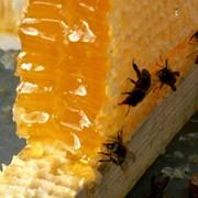 Мед сотовый или мёд в восковых сотах фото