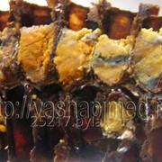 Перга. Пчелиный хлеб фото