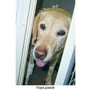 Доставка больного животного в стационар фото