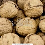 Закупка орехов оптом фото